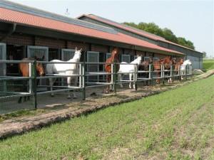 Pferde auf dem Moorhoff