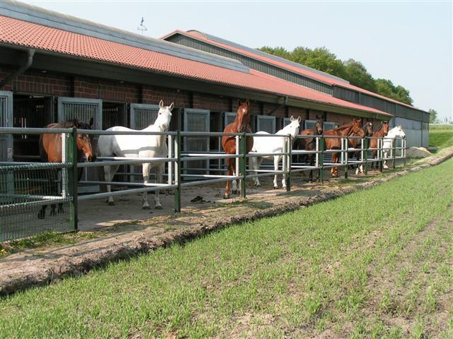 Pferde auf dem Gestüt Moorhoff