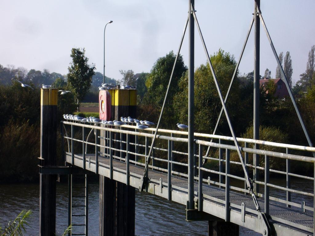 Möwen am Schleusenkanal