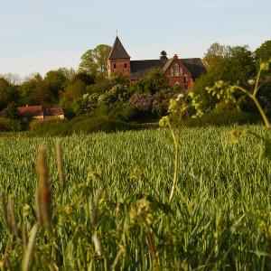 Blick von der Wesermarsch auf die Kirche in Daverden (Foto: Müller)